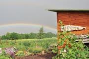Auf dem Grundstück der Ortsgemeinde Altenrhein ist durch viel Handarbeit ein paradiesischer Garten entstanden. (Bilder: zVg)