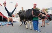 Die Artisten Janette Weisheit, Tim Thomsen und Charlotte Miller posieren. Clown Lubino hält Kuh Milka. (Bild: Stefan Hilzinger)