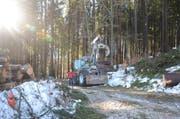 Lagebesprechung im Wald. Auf die Forstwarte wartet in nächster Zeit enorm viel Arbeit.