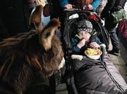 Furchtlos isst der Knirps im Kinderwagen im Angesicht des Esels seine Pommes. (Bild: Yvonne Aldrovandi-Schläpfe)