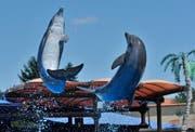 Den Delfinen im Connyland sollen zu hohe Antibiotika-Dosen verabreicht worden sein. (Bild: Reto Martin/Archiv)