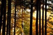 Um die Thurgauer Waldwirtschaft zu unterstützen, soll der Kanton als Bauherr einheimisches Holz bevorzugen. (Bild: Donato Caspari/Archiv)