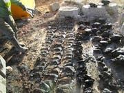Während des Abbruchs einer landwirtschaftlichen Liegenschaft entdeckten Bauarbeiter in einer versteckten Jauchegrube Tierknochen. (Bild: pd)