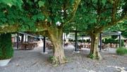 Pergola als Sonnen- und Wetterschutz halbwegs versteckt im Kastaniengarten.