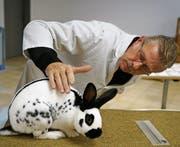Richter Beat Schweizer beurteilt ein Kaninchen der Englischen Schecken-Rasse. (Bild: Maya Heizmann)