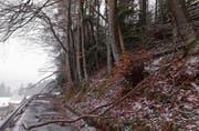 Im Dezember und Januar hatte die Forstgemeinschaft Grabus wegen der Stürme viele Waldschäden zu verzeichnen.