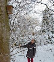 Die Nistkästen hat Elisabeth Frischknecht für höhlenbrütende Vögel aufgehängt. (Bild: KER)