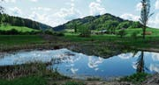 Dank der Freilegung des Ufers können Insekten im Botsberger Riet besser beobachtet werden. (Bild: PD)
