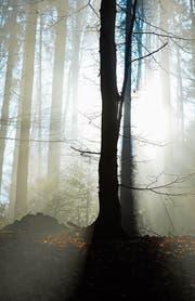 Sonnenstrahlen dringen in den Wald bei Hugelshofen. (Bild: Donato Caspari)