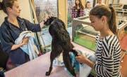 Die Tiermedizinische Praxisassistentin Sarah Casagrande trocknet mit Schülerin Anja Stutz Hündin Lisha ab. (Bild: Reto Martin)