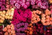 Viele schenken ihren Liebsten Rosen zum Valentinstag. Mann kann aber auch mit anderen Blumen verzücken. (Bild: CHRISTIAN CHARISIUS (DPA))