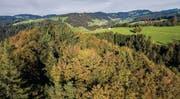 In zwei Jahren geniessen hier die Besucher den Perspektivenwechsel in den Baumwipfeln – Blick gegen Degersheim. (Bild: Urs Bucher (Steinwald, Mogelsberg))
