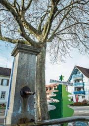 Der Ahorn beim Dorfbrunnen wird gefällt. (Bild: Thi My Lien Nguyen)