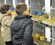 Zwei Buben bestaunen im «Thurgauerhof»-Souterrain die Kaninchen in der Ausstellung der Kleintierzüchter. (Bild: Mario Testa (12.01.2014))