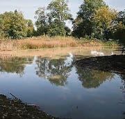 Ein Drittel des Bodenlosen Weihers wurde vom Schlamm befreit. (Bild: sdu)