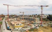 Das Areal Witenzelg im Bau: Im Hintergrund seine zukünftige «Zentralheizung», der Bodensee. (Bild: pd)