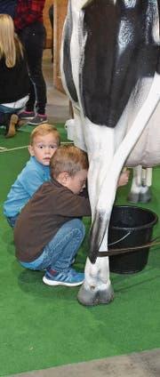 Der Nachwuchs macht erste Melkversuche. (Bilder: Adi Lippuner)