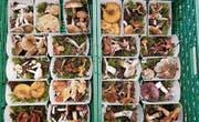 Eine vielfältige Anzahl Pilze diente zu Studienzwecken. (Bild: PD)