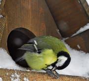 Er will Futter! Ornithologen hin oder her. (Bild: Bert Stankowski)