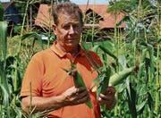 Josef Grob hat mit dem Anbau von Süssmais eine Nische entdeckt. (Bild: Trudi Krieg)