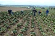 Landwirtschaftliches Personal muss beim Kanton St.Gallen 48 Stunden pro Woche arbeiten. (Symbolbild/Nana do Carmo)