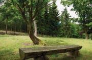 In Uesslingen-Buch steht ein Friedwald. (Bild: Donato Caspari)