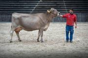 """Eine Kuh an der Olma: Die Drehvorlage für """"Cowgirl"""" von Marc Vogel handelt von einer kleinen Reiterin, die mit einer Kuh zur Olma aufbricht, um dort einen Schönheitsconcours zu gewinnen. (Bild: Ralph Ribi)"""
