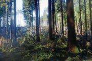 Wo vor wenigen Tagen noch dichter Wald stand, ist eine Schneise entstanden. Die umgestürzten Bäume liegen kreuz und quer am Boden. (Bild: Corinne Hanselmann)