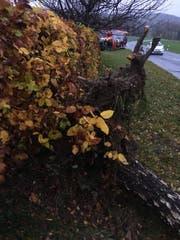 Technische Hilfeleistung der Feuerwehr in Bischofszell: Ein umgestürzter Baum hat am Sonntag die Strasse blockiert. (Bild: Leserbild)