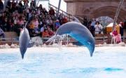 Wenn im Connyland die neue Saison eröffnet wird, wollen Tierschützer gegen das Delfinarium demonstrieren. (Bild: Archiv/ Donato Caspari)
