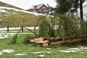 Wie in der Herisauer Sturzenegg knickte der Sturm Burglind am Mittwoch vielerorts Bäume. (Bild: Mea McGhee)