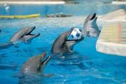 Tiere in Gefangenschaft brauchen Unterhaltung. (Bild: Reto Martin / Archiv)
