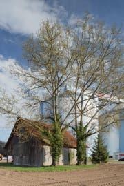 Blick auf die Silos der Zuckerfabrik. (Bild: Markus Frietsch/PD)