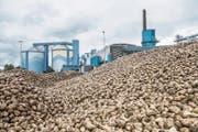 Berge von Rüben lagen während der Kampagne auf dem Anfuhrplatz bei der Zuckerfabrik. (Bild: Thi My Lien Nguyen)