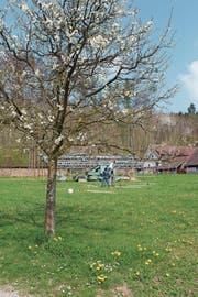 Das Künstlerduo Bildstein/Glatz hat vor der Kartause Ittingen damit begonnen, den Loop aufzubauen. (Bild: pd)