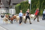 Die Tiere und die Betreuer unterwegs.