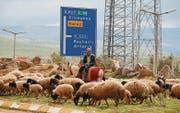 Ein Hirt und seine Schafe: Alltag an der türkisch-syrischen Grenze. (Bild: Michael Wrase)