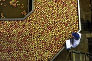 Apfelsortieranlage in Südafrika: Berechnungen zufolge kann ein Apfel aus Südafrika ökoeffizienter sein als einer aus der Schweiz – und zwar im April. Dann ist er auf der Südhalbkugel gerade geerntet worden. Die Produktion, die Lagerung und der Transport einer Tonne dieser Äpfel verursacht weniger als 250 Kilogramm Kohlendioxid. Das sind rund 50 Kilogramm Schadstoff weniger als bei einer Tonne Schweizer Äpfel. Denn diese haben im April schon einige Monate Lagerung im Kühlhaus hinter sich. (Bild: Alistair Berg (Digital Vision))
