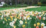 Blühende Bänder im Burstelpark (Bild: Mathias Frei)