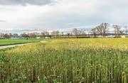 Hier auf dem Gebiet Seezelg zwischen Kreuzlingen und Bottighofen soll das Reka-Dorf entstehen. (Bild: Andrea Stalder (2.2.2016))