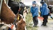 Bei der Stallarbeit helfen die Spielgruppenkinder gerne mit. Das Füttern der Kühe ist eine begehrte Tätigkeit. (Bild: Donato Caspari)