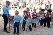 450 Tiere wurden an der diesjährigen Viehschau in Gams aufgeführt. Weitere Bilder gibt es auf www.gams.ch. (Bild: PD)