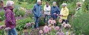 Im Garten von Elisabeth Meili-Müller in Hurnen blühen die Blumen auch bei Regenwetter. (Bild: Christoph Heer)
