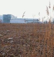 Das Planungsgebiet Rietwis liegt derzeit brach. (Bild: Serge Hediger)