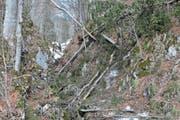 Umgestürzte Bäume versperren den Wanderweg von Wildhaus durchs Flürentobel. Die Passage bleibt noch einige Zeit lang geschlossen.