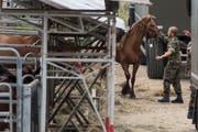 Die Pferde des Tierquälers von Hefenhofen sollen am Donnerstag verkauft werden. (Bild: ENNIO LEANZA (KEYSTONE))