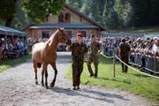 Nun werden auch die letzten Pferde des mutmasslichen Tierquälers von Hefenhofen im Kompetenzzentrum der Armee verkauft. (Bild: ANTHONY ANEX (KEYSTONE))