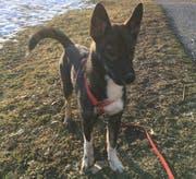 Hundehalter sind zur Vorsicht aufgerufen, denn in Liechtenstein wurde ein mit Draht und Gift präparierter Köder festgestellt. (Bild: PD)