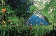 Artenreiche Blumenwiesen gibt es heute nur noch in den höheren Lagen des Appenzellerlandes. (Bild: ©appenzell.ch)