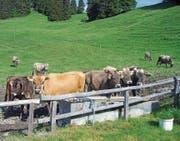 Durch die Sanierung der Wasserversorgung kann die Alpkäsefabrikation und Milchverarbeitung auf der Grabser Ortsgemeindealp Gamperfin langfristig sichergestellt werden. (Bilder: Peter Tobler/Florian Tischhauser)